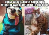 Cats and dogs war memes
