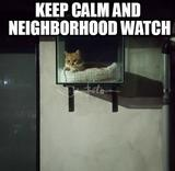 Cat in neighborhood watch memes