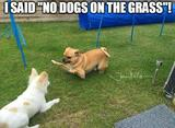 No dogs on the grass memes