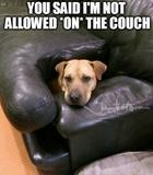 Not allowed on the couch memes