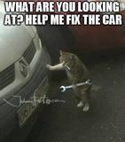 Fix the car memes