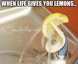 Life gives you lemons memes