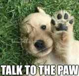 Talk to the paw memes