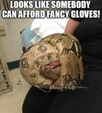 Fancy gloves memes