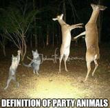 Party animals memes