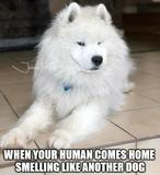 Comes home memes