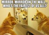 Mirror on the wall memes
