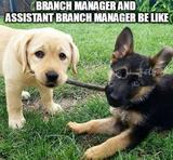 Branch manager memes