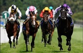 Horse Racing bets site